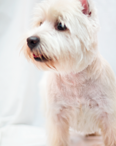 http://www.dogmodel.it/wp-content/uploads/2018/05/altre-foto-27-400x500.png