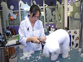 Srevice image thumbnail
